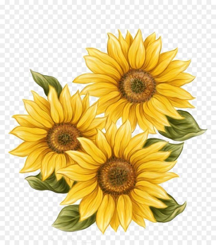 Aquarell Malen Gemalt Sonnenblume Zeichnen Handbemalt