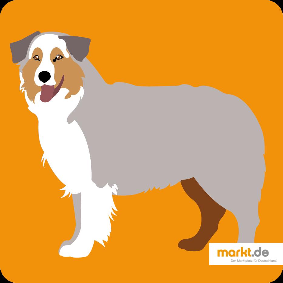 Australian Shepherd Charakter, Haltung, Pflege (mit