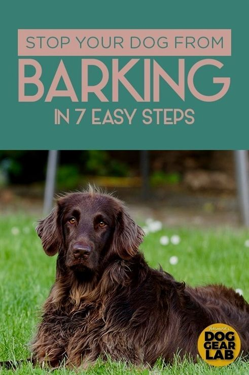Dog Training Baltimore Dog Training 12801 Pitbull Service Dog