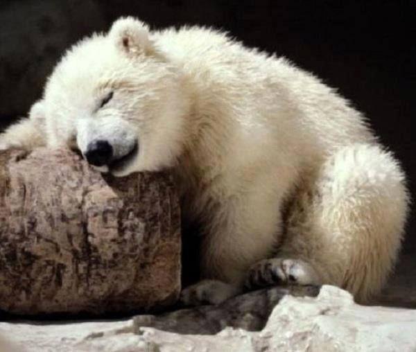 Oh a sleepy little bear....so-o sweet!