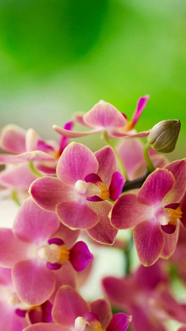 Pin by on pinterest flowers beautiful flowers and orchid izmirmasajfo