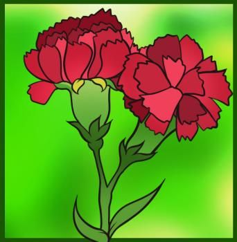 How To Draw Carnations Drawings Flower Drawing Carnations