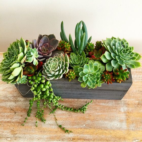 Image of Wooden Succulent Centerpiece #succulents