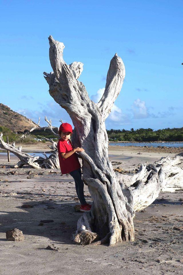 #Saline #St_Barth #Antilles #Saint_Barthélemy #voyage #découverte #ArthurAutourDuMonde