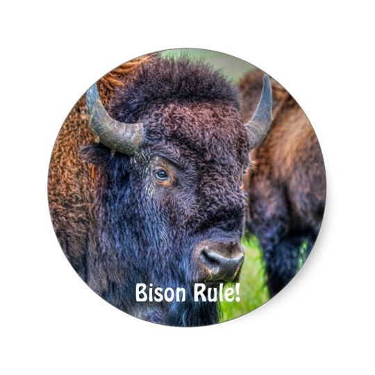 Bison Rule! Buffalo-Lover Art Stickers