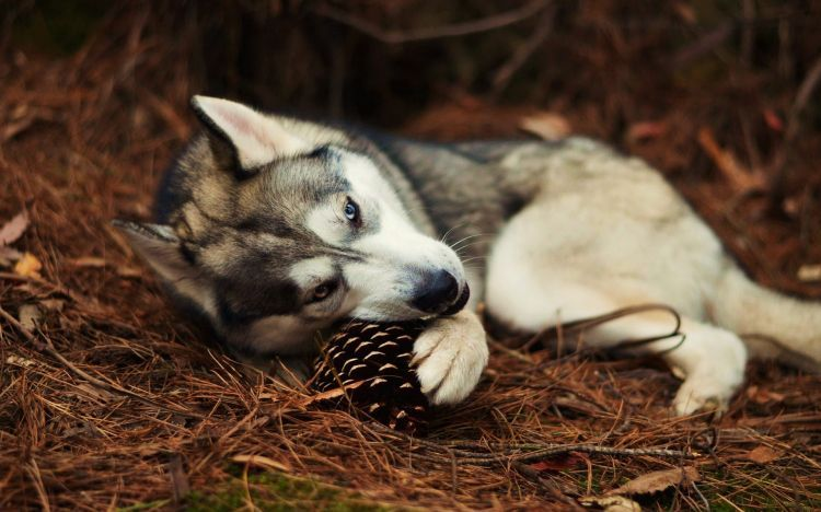 Epingle Par I M Here Sur ƹ ӂ ʒ Animals ƹ ӂ ʒ Inspiration And Models To Draw Animaux Husky Chien