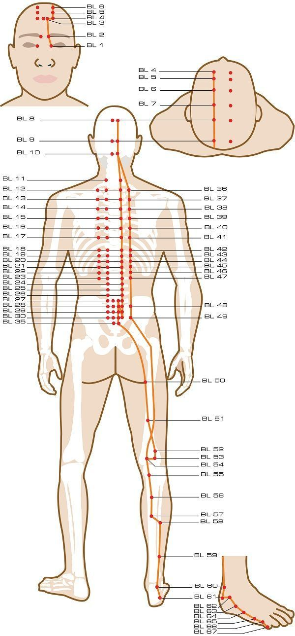 Urinary bladder acupuncture points reflexology tips pinterest urinary bladder acupuncture points ccuart Gallery