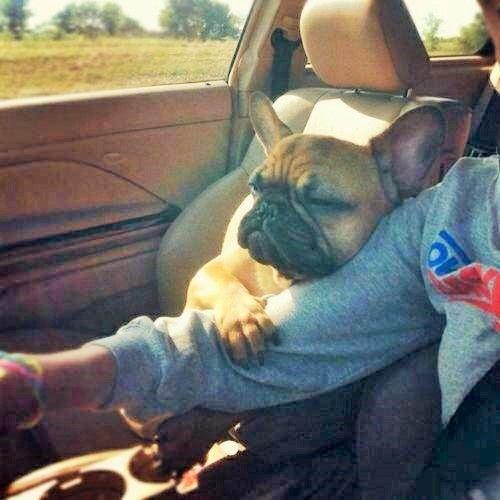 Sweet Lovely Frenchie French Bulldog Hug Franzosische
