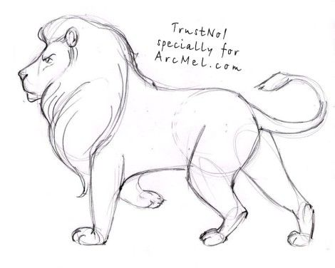 How to draw a lion step by step 4