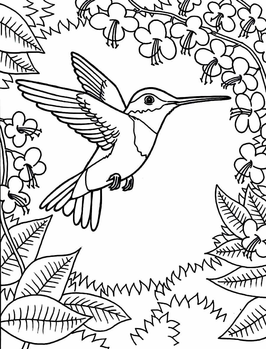 Free Printable Humming Bird Coloring Pages For Kids Bird Coloring Pages Hummingbird Colors Printable Coloring Pages