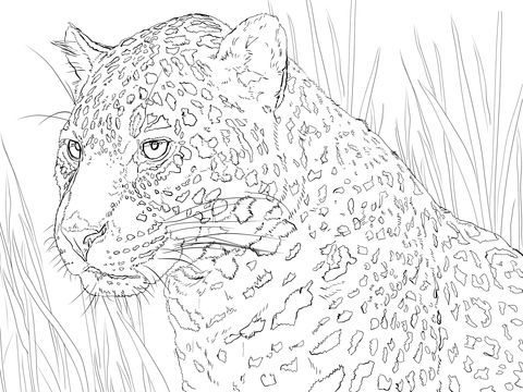 Jaguar Portrait Coloring page | Animal coloring pages by Hannah Buie ...