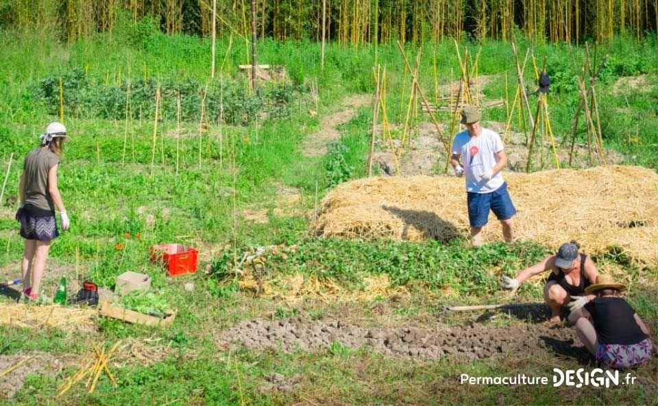 Jardin Foret Comestible En Permaculture Et Potager Du Projet Tera Photo C Bertrand Fourgs Pour Lire L Article Permaculture Design Jardin Foret Permaculture