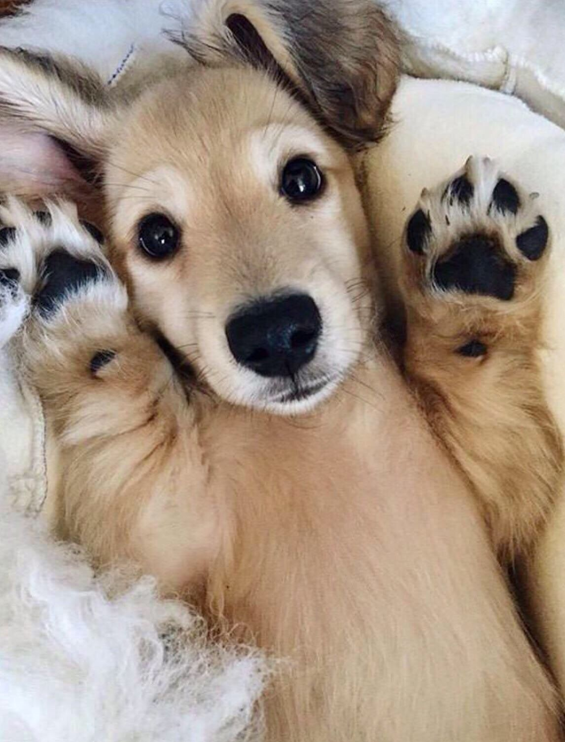 Send Belly Rubs Please Cute Dogs Cute Animals Cute Dogs And Puppies