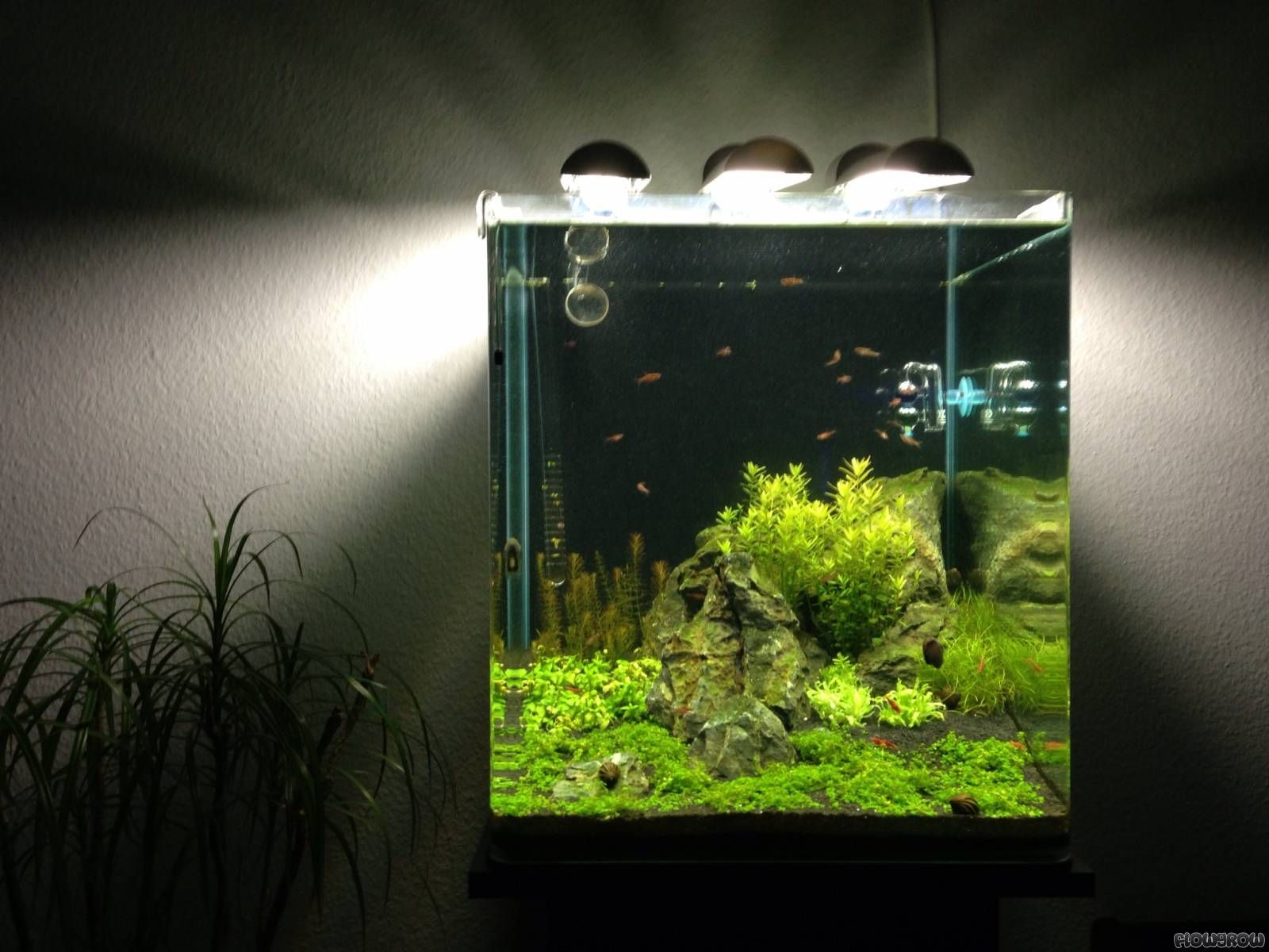 Tumblr nano cube aquascaping nano cube 60l dennerle for Aquarium nano cube