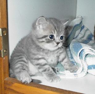 Tubby kitty :)