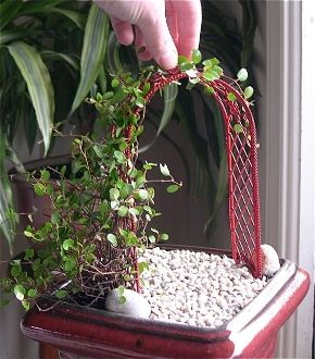 Miniature Garden Plants for Miniature Gardening