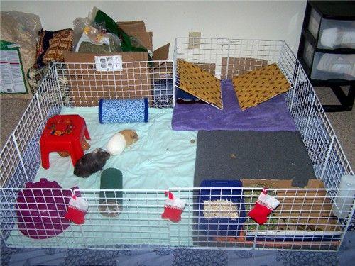 Homemade Hidey House Rack Guinea Pigs Pinterest