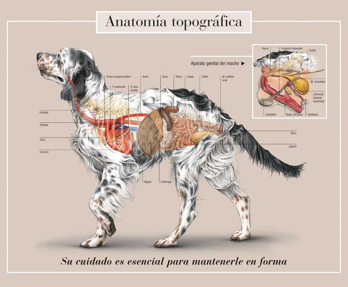 spanish dog | \