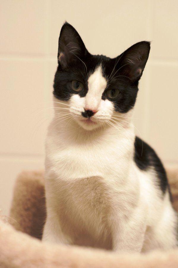 kittens2.24.15_22__1425402106_104.174.50.126