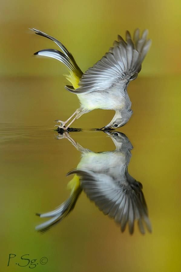 Beautiful bird reflection - by P.Sg