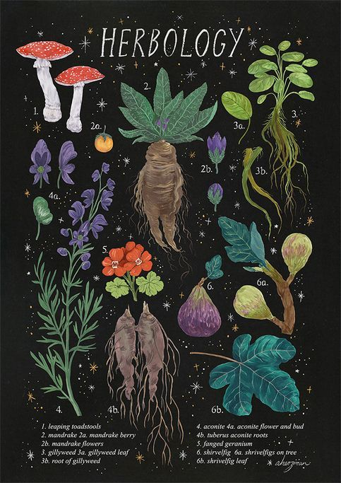 herbology (starry background) from Amanda Herzman -   10 magic planting Illustration ideas