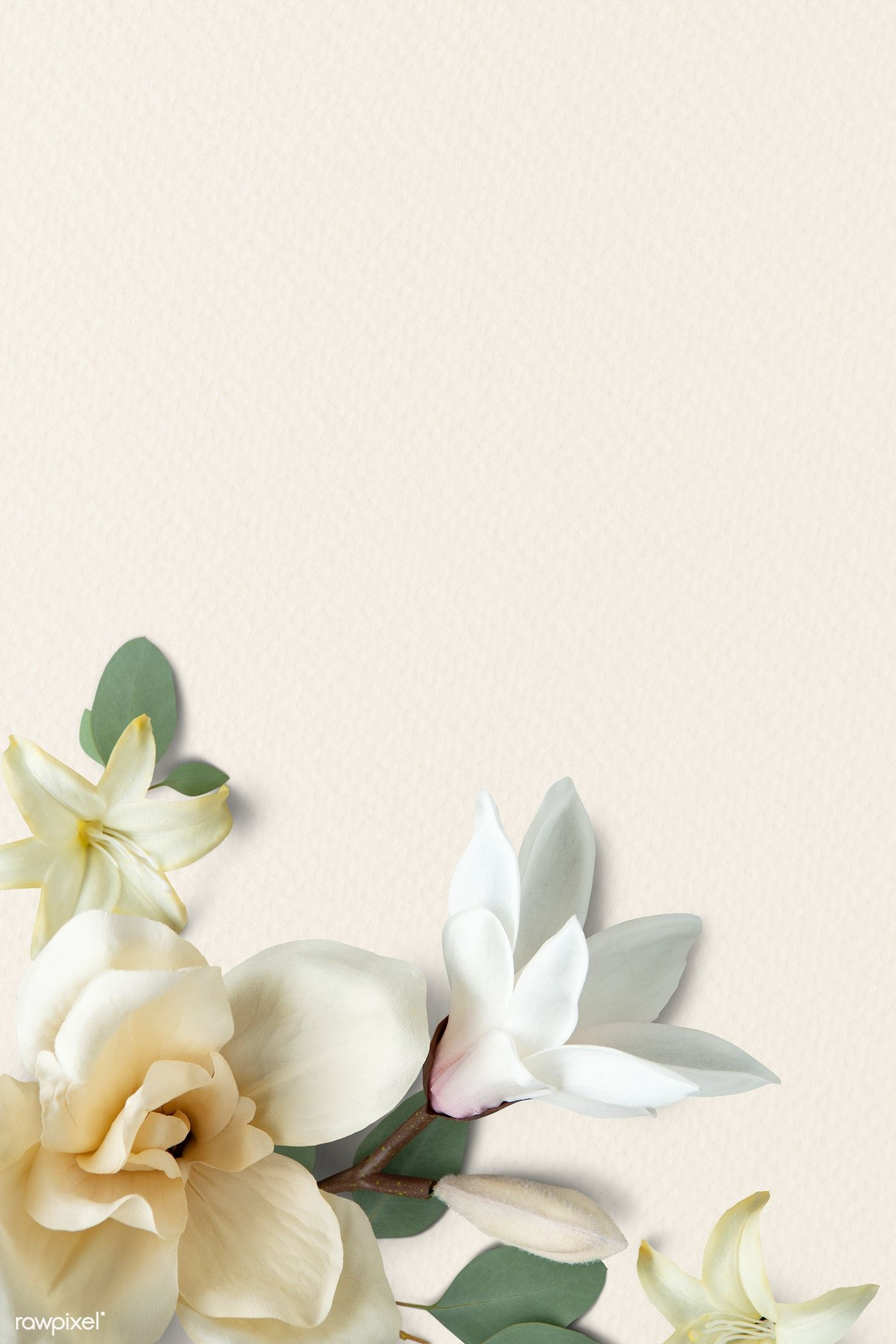 Download Premium Psd Of White Magnolia Pattern Background 1204168