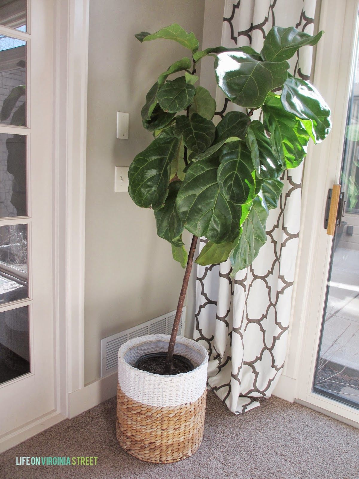 Home decor plants ideas  The brown seems to work its way up the leaf  Learn more by