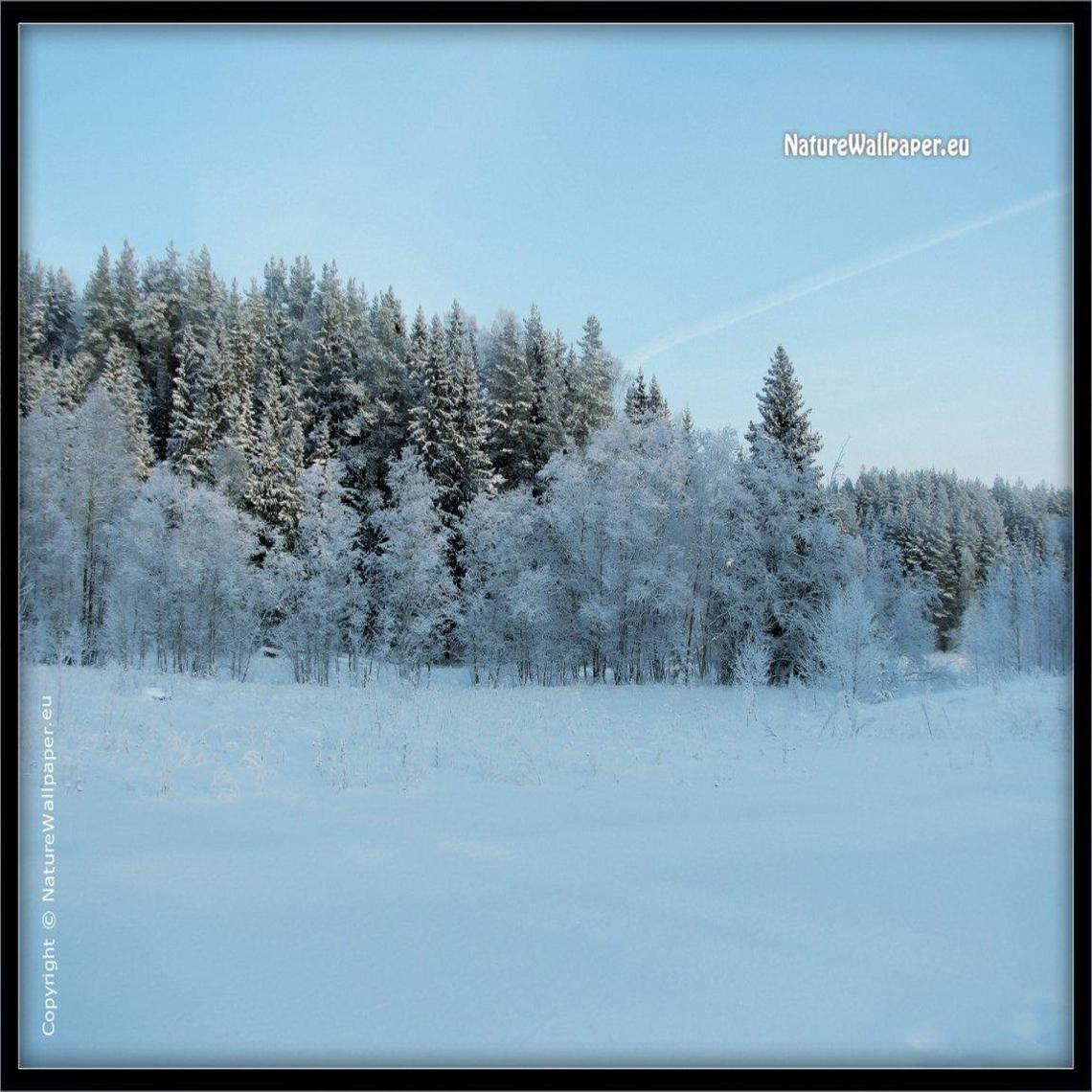 winter tress