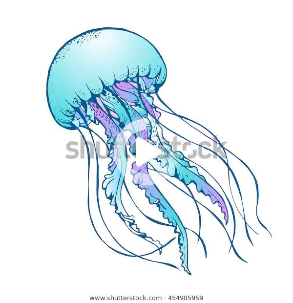Jelly Fish Vector Illustration Stock Vector Royalty Free 454985959 Fish Sketch Fish Illustration Fish Vector