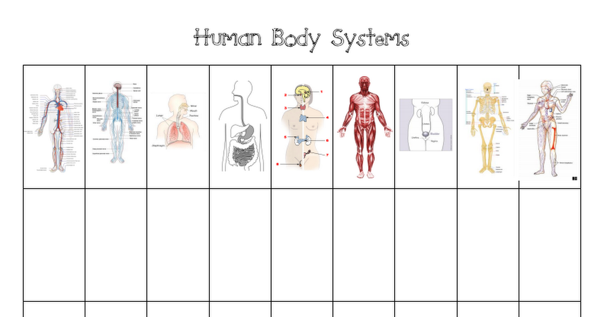 Human Body Systems Chartpdf Im Adapting This Chart To Use With My