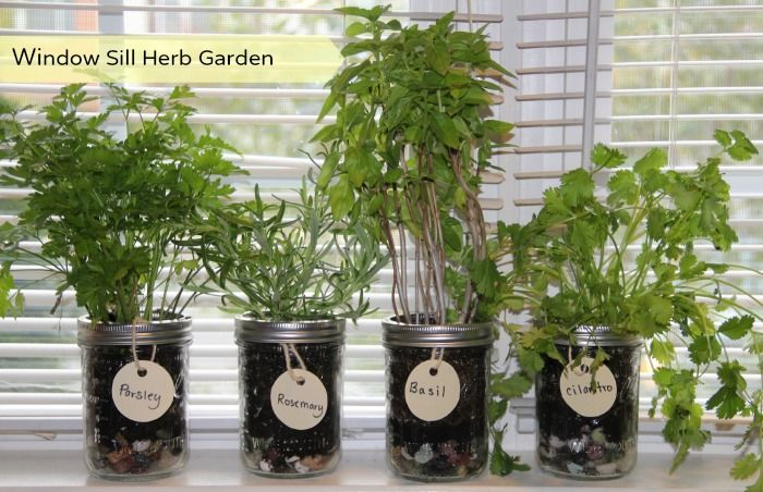 Charming Window Sill Herb Garden   Perfect With The Cold Weather Coming In!