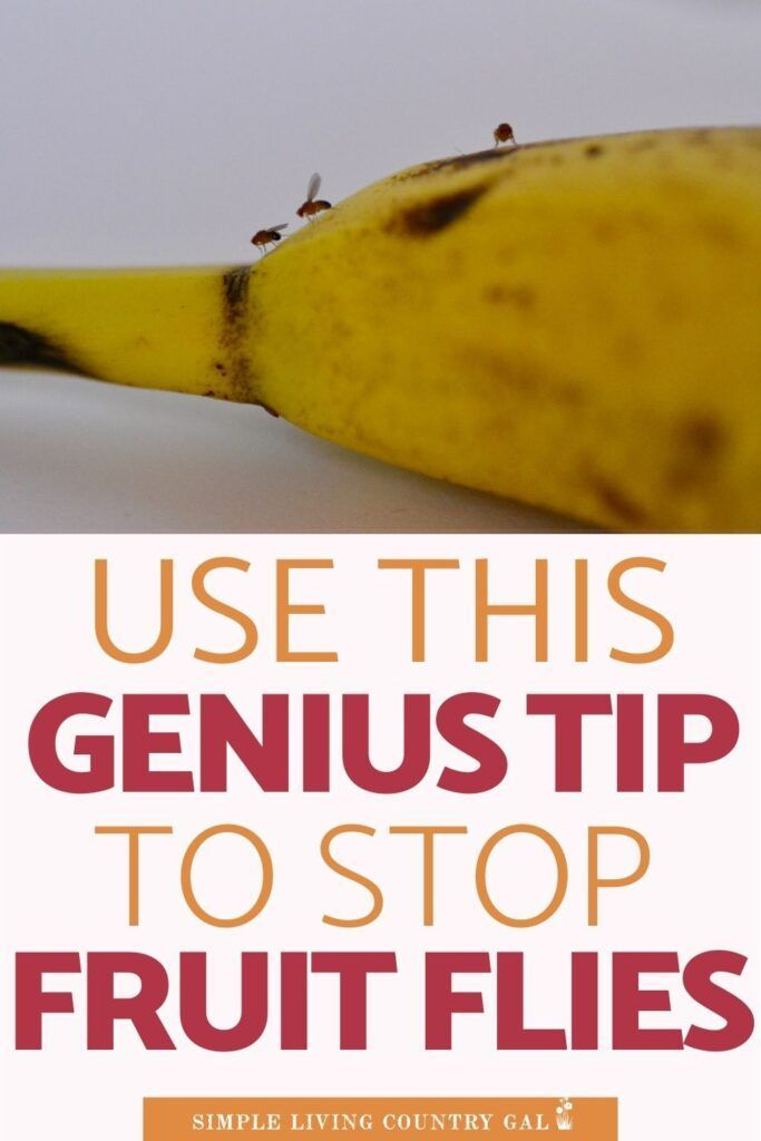 How to get rid of fruit flies without sprays. in 2020 ...