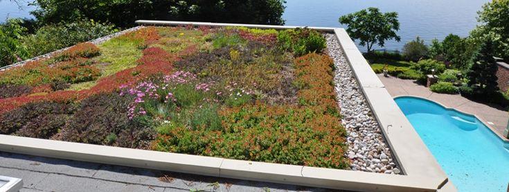 Advanced Green Roof Technology | Roofing, Skylights, Vents | Pinterest |  Gröna Tak Och Teknologi