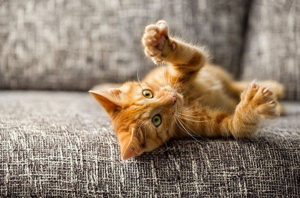 Why Declawing Your Cat Is Cruel (And Why It's Time To Stop)