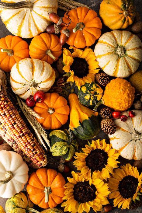 Fall Background With Pumpkins Wall Mural #happyfallyallwallpaper