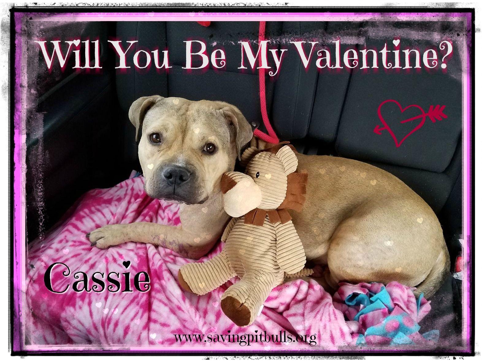 Adopt Mason On Rescue Dogs Pet Adoption Pitbulls