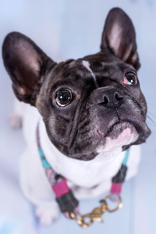 Hundefotografie Im Markischen Kreis Und Nrw Hundefotografie Hundefotos Hunde Fotos