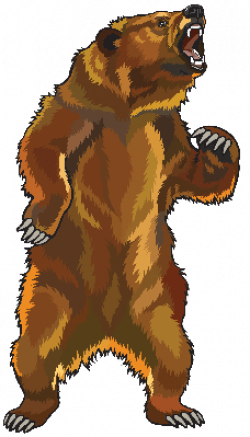 Clipart Transparent 23 62kb 228x399 Bear Illustration Bear Drawing Bear Coloring Pages
