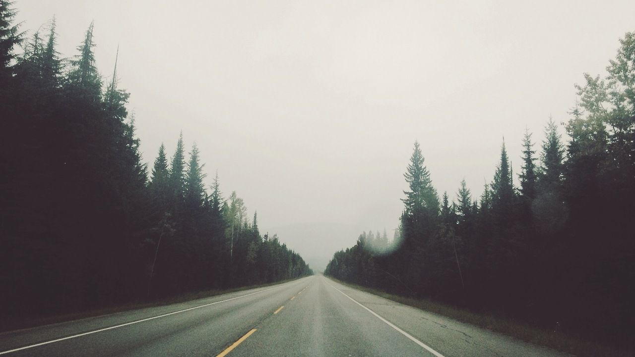 photography landscape trees nature road fog streetscape alcyere