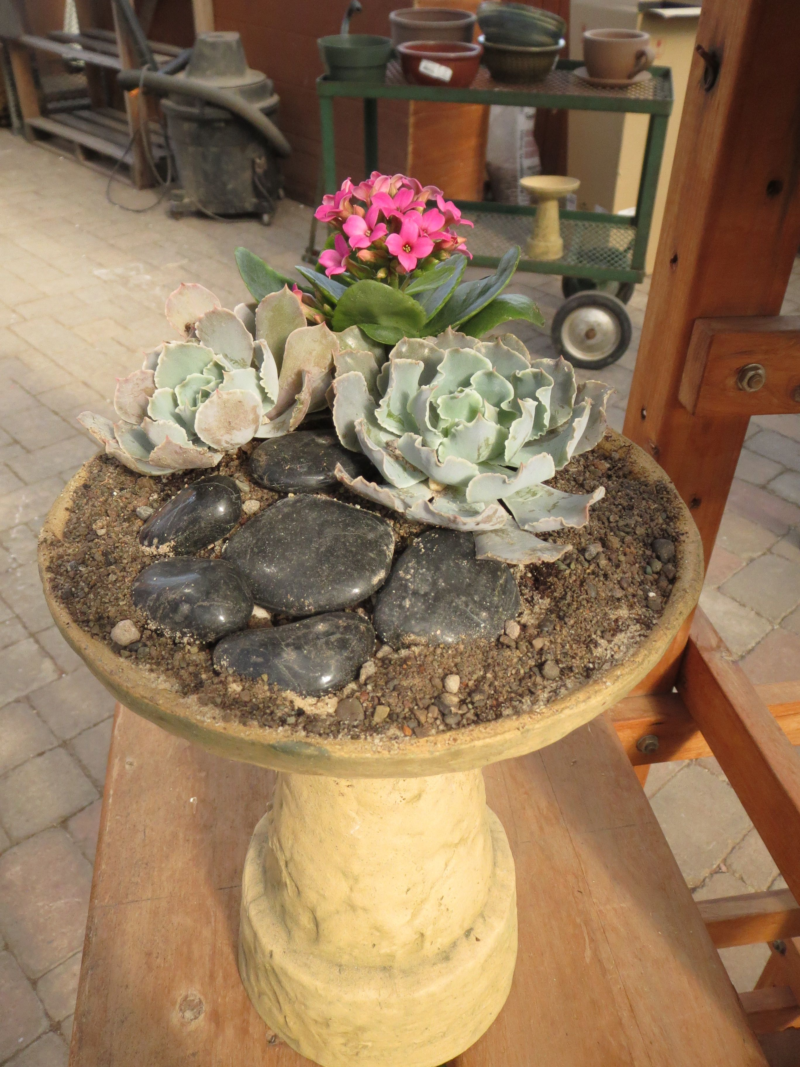 Dish Garden Picture 2 Horticulture therapy, Garden pictures