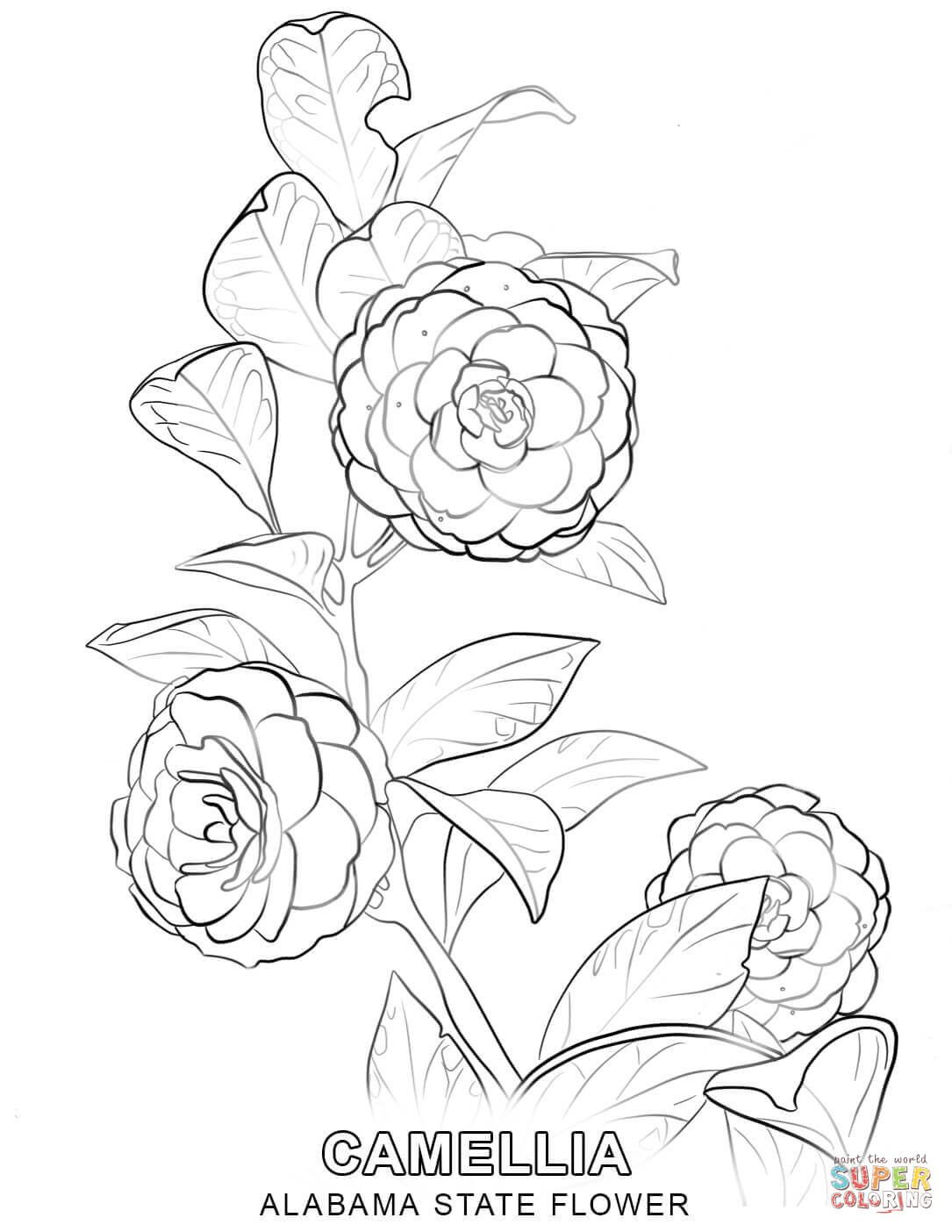 Hawaii State Flower Coloring Page Youngandtae Com Flower Coloring Pages Flower Drawing Tree Coloring Page