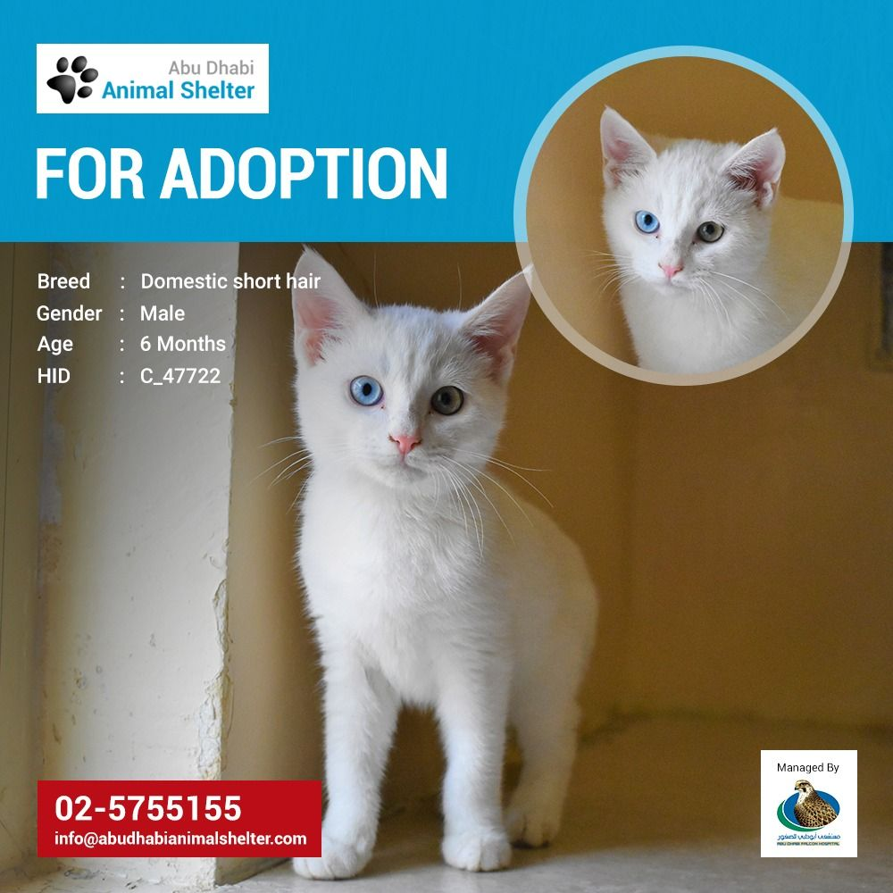 Abu Dhabi Animal Shelter Animal Shelter Adoption Animal Shelter Animals