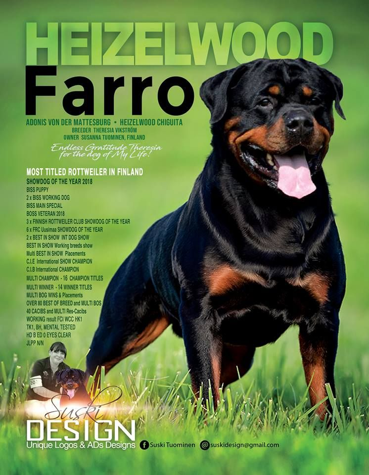 Most Titled Rottweiler In Finland Show Dog Of The Year 2019