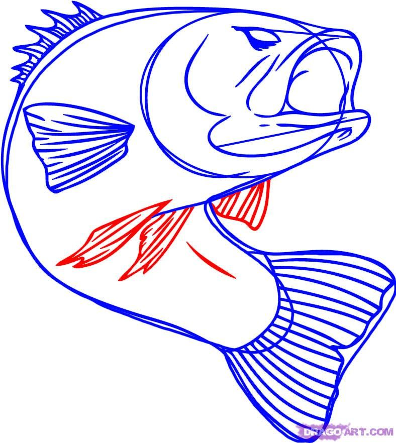 how to draw a bass fish step 5 | paintings | Pinterest