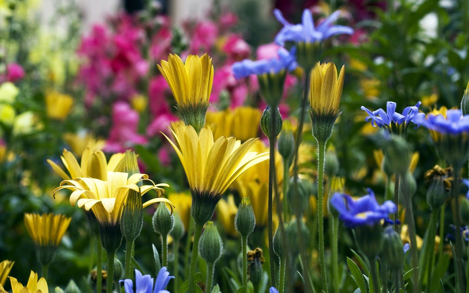 Flower In Garden Wallpaper flower garden wallpaper flower