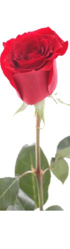 Message d'amour: Poemes d'amour sensuels