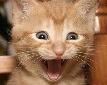 Image result for excited cat