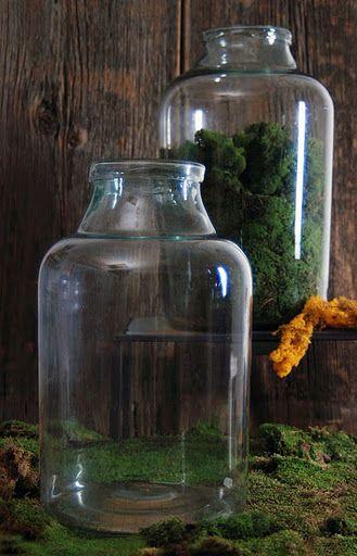 old terrarium bottles