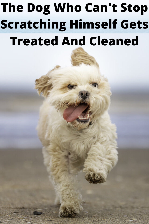 b920d0e26758520455ecd52e35693e16 - How Can I Get My Dog To Stop Scratching Himself