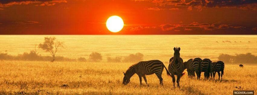 Zebra Africa Fb Cover Scenery Wallpaper Beautiful Scenery Wallpaper Safari Adventure